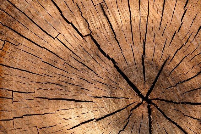 Come riconoscere i tarli del legno e procedere alla disinfestazione
